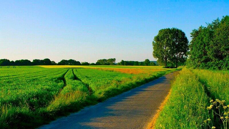 Лето картинки красивые