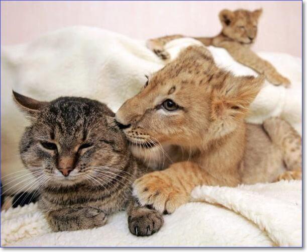 Необычная дружба зверей