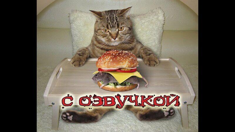 Приколы про кошек с озвучкой