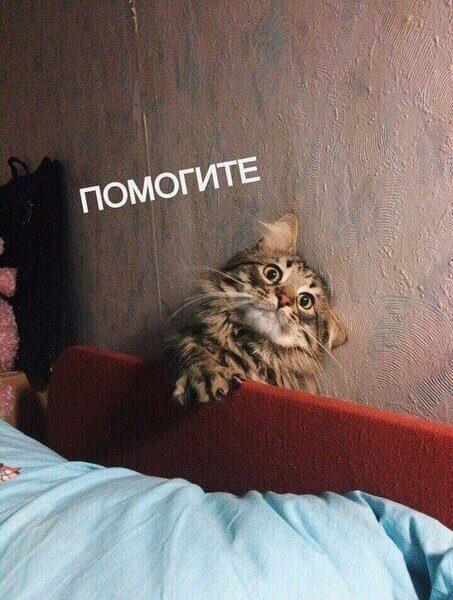 Трогательные приключения котейки