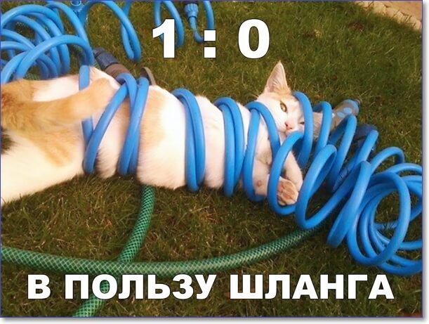 Прикол дня: Котик против шланга