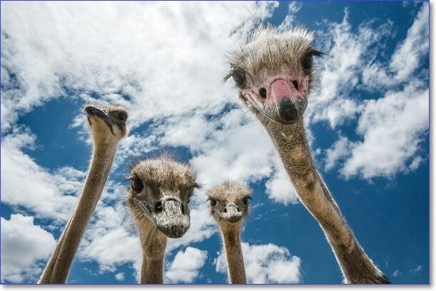 Смешные животные фото бесплатно