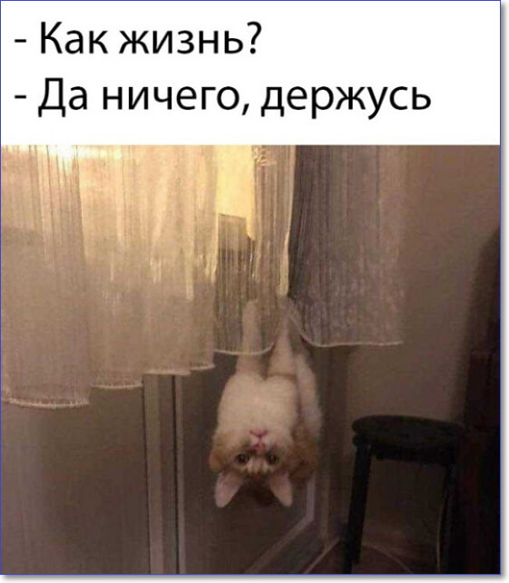 Фото приколы Крейзи ру
