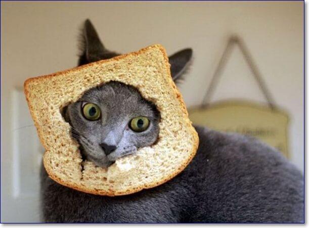 Приколы про хлеб