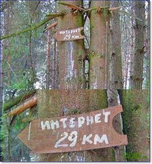 Лес приколы картинки
