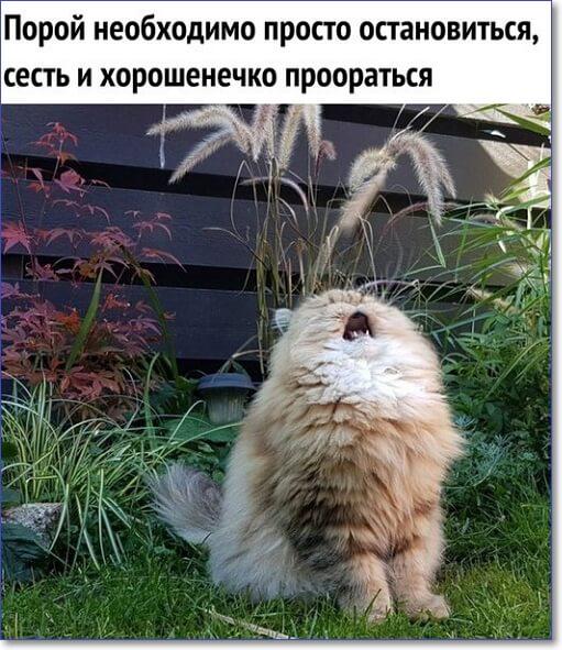 Красивые и смешные фото
