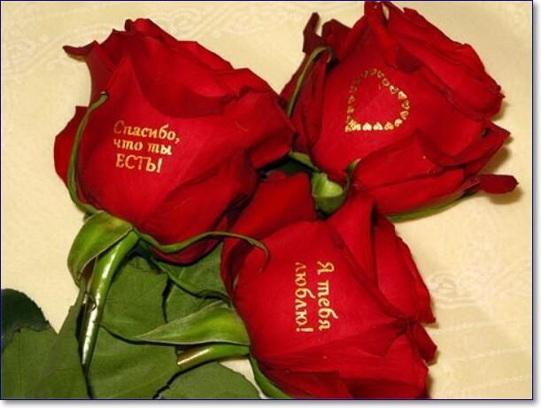 Скачать картинки красивые розы с надписями