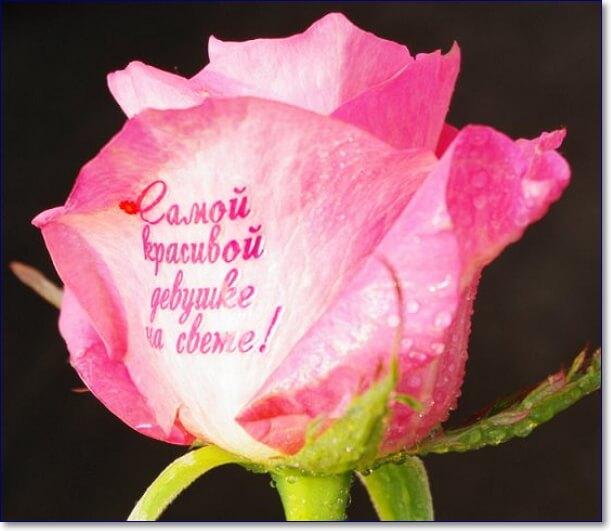 Картинки цветы с надписью для юлии, успешной сдачей
