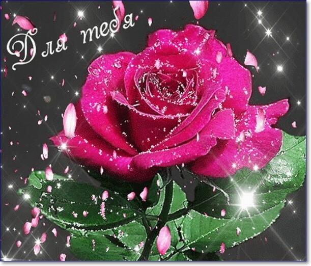 Картинки с цветами красивые блестящие