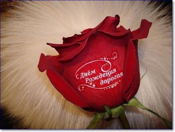 Днем, красивые картинки фото роз с надписью