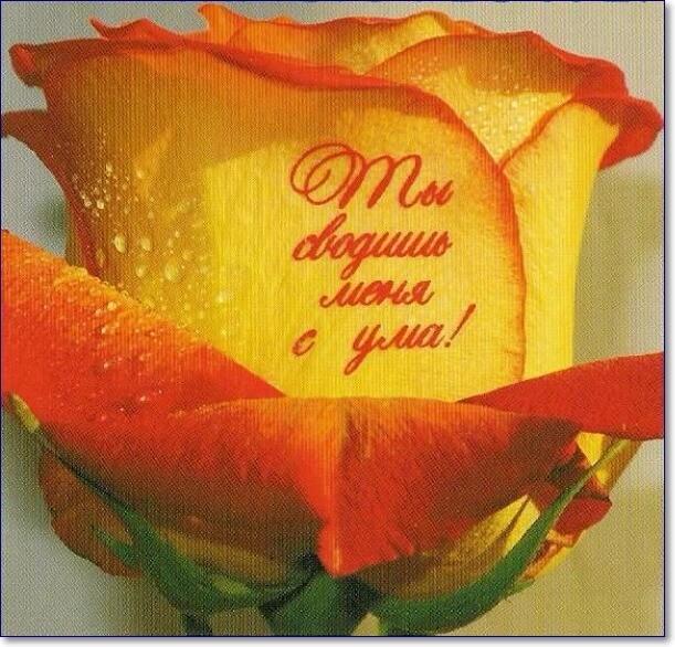Красивые картинки розы с надписью