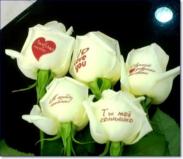 Картинки белых роз с надписями, для
