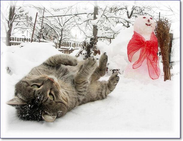 Смешные фото котов зимой