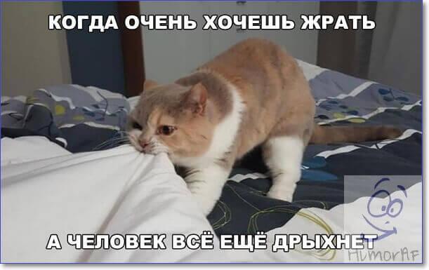 Фото котэ приколы
