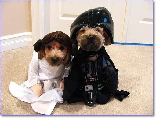 Фото приколы с собаками
