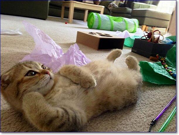 Фото смешных котов смех до слез
