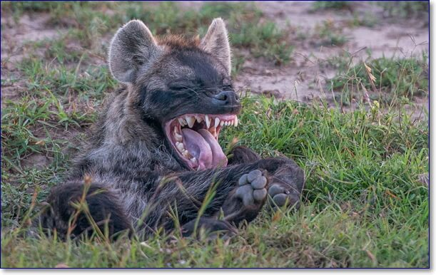 Фото забавных животных приколы