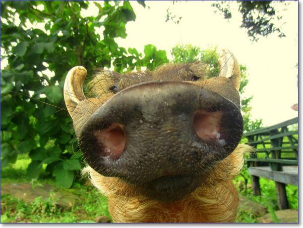 Картинки с животными красивые и смешные скачать