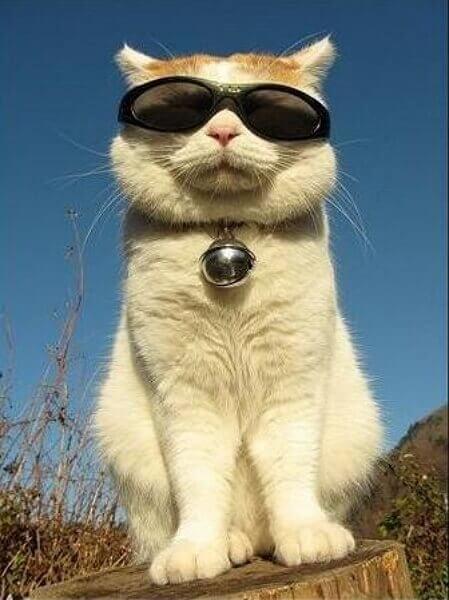 Картинки смешные с котами для настроения
