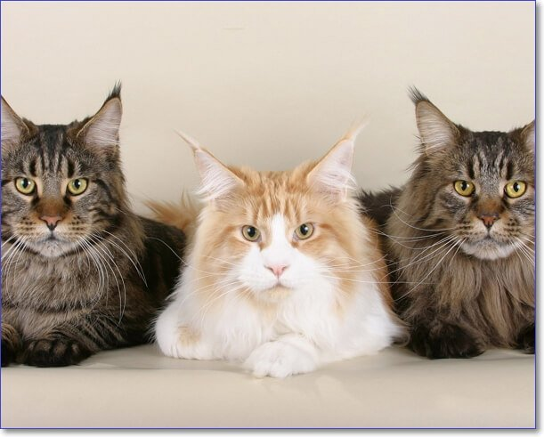 Котики фото смешные и милые