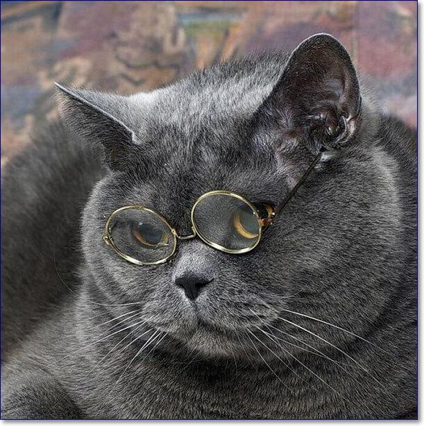 козла параде картинки британских котов прикольные и смешные постановка возможна