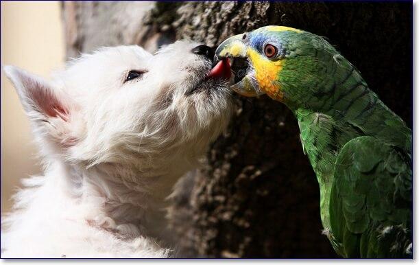 Прикольные фото животных скачать
