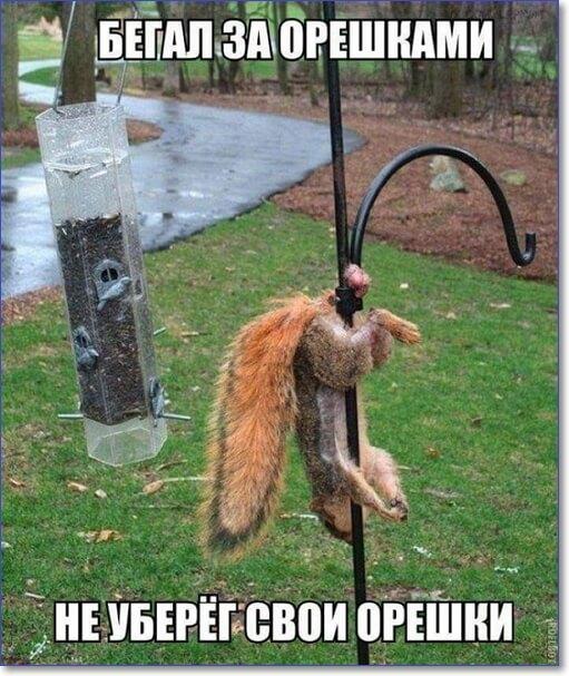Прикольные и смешные фото мемы