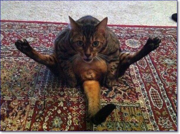 Самые смешные кошки в мире фото