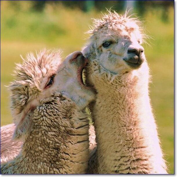 Самые смешные животные фото приколы