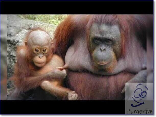 Самые смешные животные в мире фото