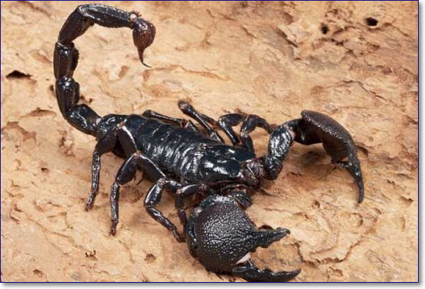 Скорпион прикольные фото