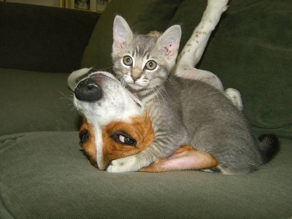 Смешные фото котов с надписями до слез