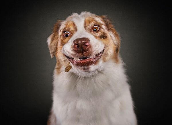 Смешные фото песиков