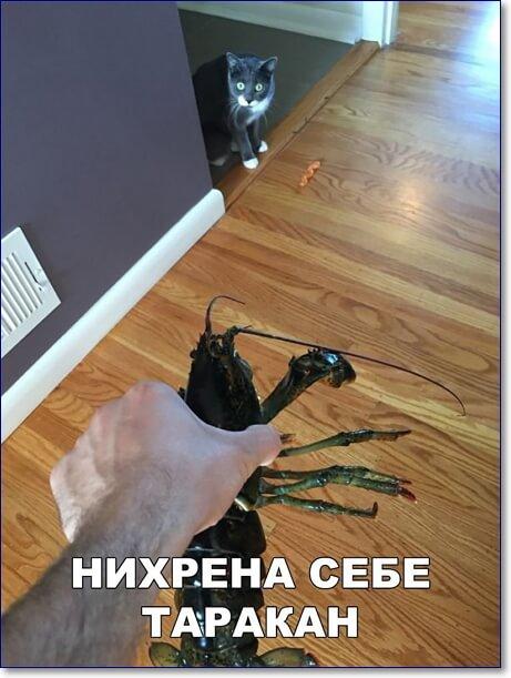 Смешные фото с подписями новые и очень смешные