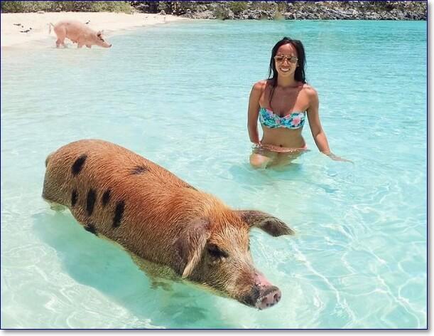Смешные картинки про купание