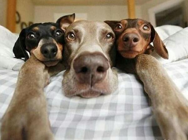 Смешные собаки фото до слез