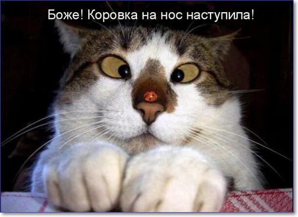 Фото котиков смешных и няшных