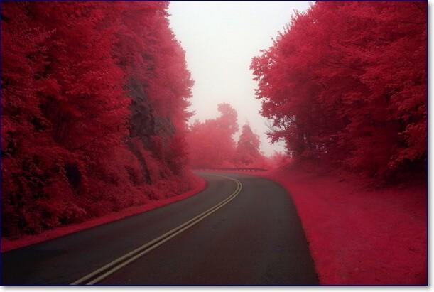 Красивые картинки бордового цвета
