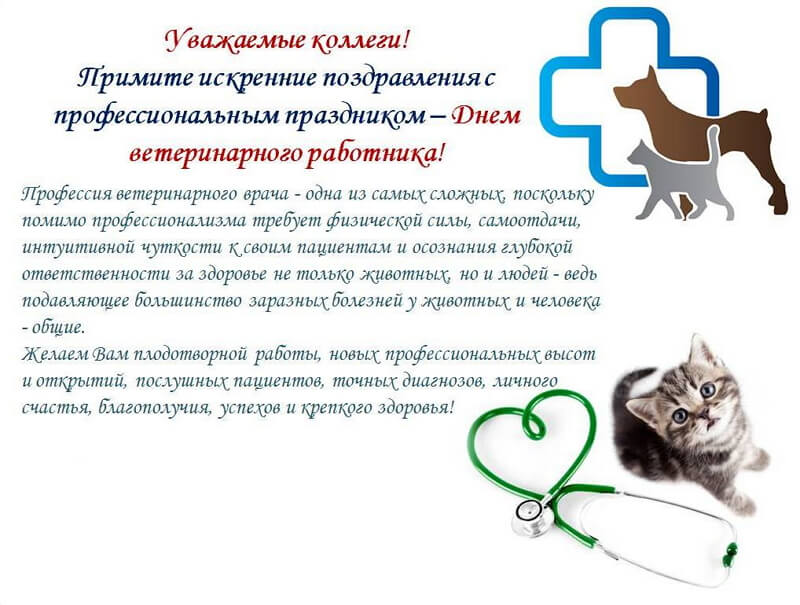 Благодарность ветеринару стихи