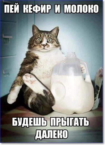 Смешные фото котов с комментариями