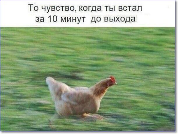 Смешные картинки куриц с надписями, днем