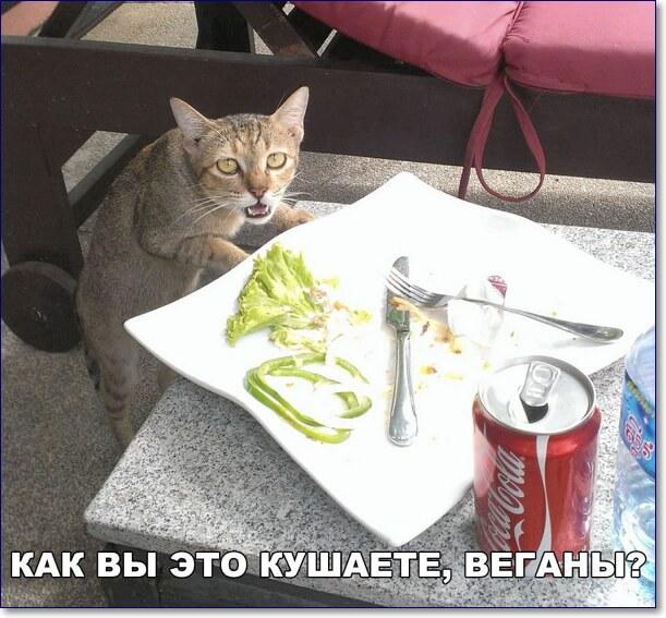 Смешные картинки мемы