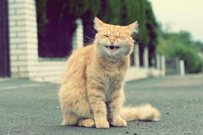 Кошки видео приколы до слез