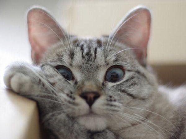 Смотреть видео приколы про кошек до слез