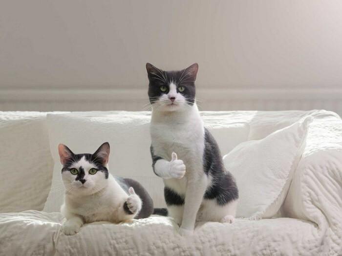 Видео приколы ржачные про кошек