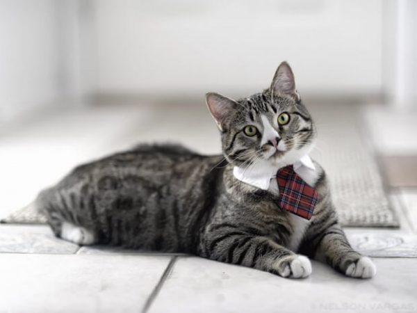 Животные - кошки видео приколы