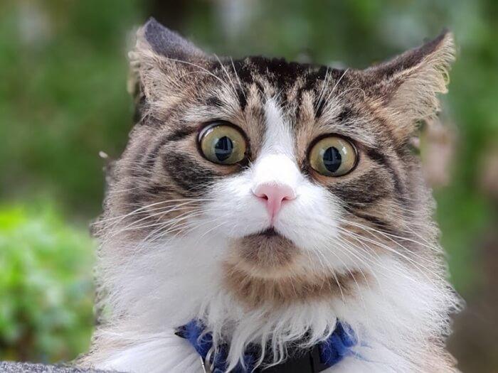 Cкачать видео приколы с котами