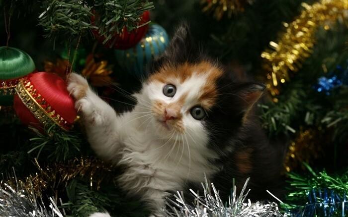 Кошки и новогодние елки видео приколы