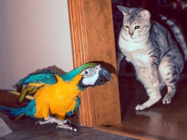 Кошки и попугаи видео приколы
