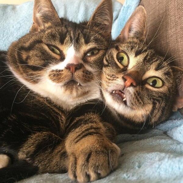 Кошки приколы до слез видео ржака